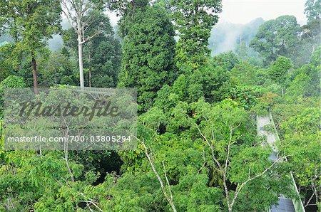 Canopy Walkway Sepilok Rainforest Discovery Center, Sabah, Borneo, Malaisie