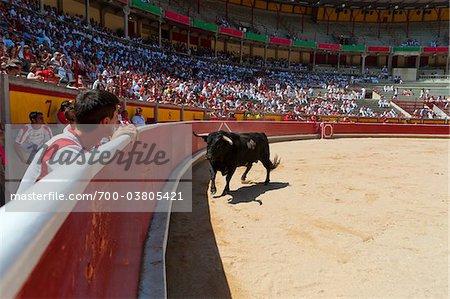 Stier in der Stierkampfarena, Fiesta de San Fermin, Pamplona, Navarra, Spanien