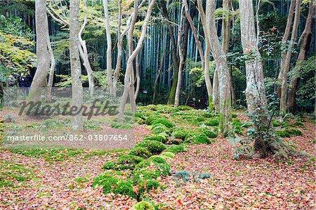 Asie, Japon. Kyoto, Sagano, Arashiyama, Gio-ji, Temple (Gioji), jardin de mousse