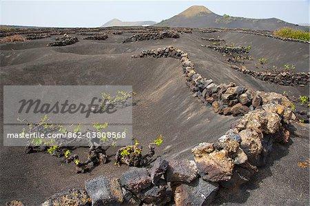 Île de Lanzarote. Appartient aux îles Canaries et sa formation est due à une activité volcanique récente. Espagne. À La Geria, les vins sont produits dans la cendre volcanique complet.