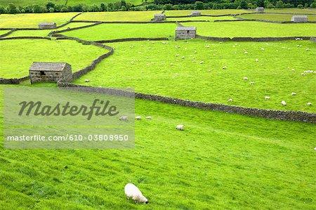 Angleterre, Yorkshire Dales, paysage entre Reeth et Muker