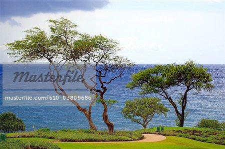 Aux États-Unis, Hawaï, l'île de Maui, bord de mer