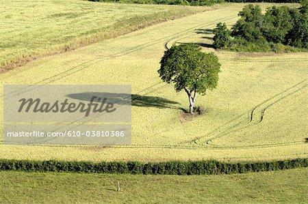 France, Burgundy, Morvan landscape