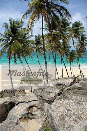 Barbade, baie de fond