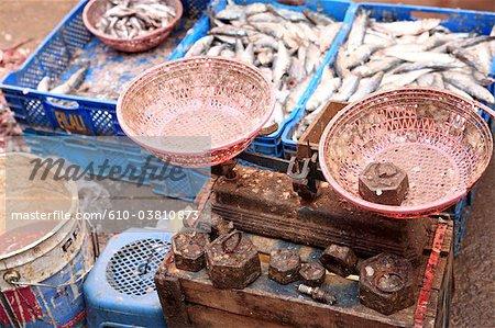 Maroc, Marrakech, marché berbère, poissons