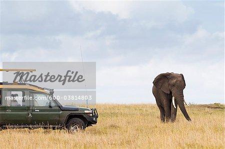 Safari Vehicle and African Bush Elephant, Masai Mara National Reserve, Kenya