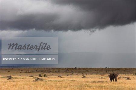 African Bush Elephant and Stormy Sky, Masai Mara National Reserve, Kenya
