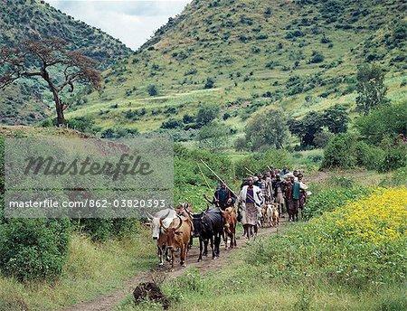 Bétail en voiture agriculteurs au marché de Senbete, qui est un important marché hebdomadaire à proximité de l'escarpement occidental de l'Abyssinie Rift.Agriculture forme l'arrière-plan de l'économie du pays avec 90 pour cent de sa population de gagner sa vie de la terre.
