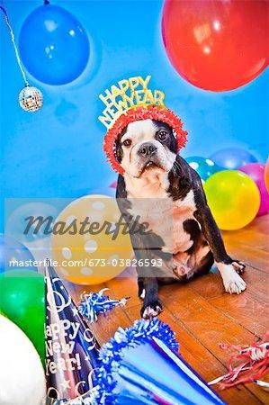 Hund in Geburtstag Partyhut