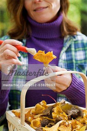 Femme, cueillette de champignons, Suède.