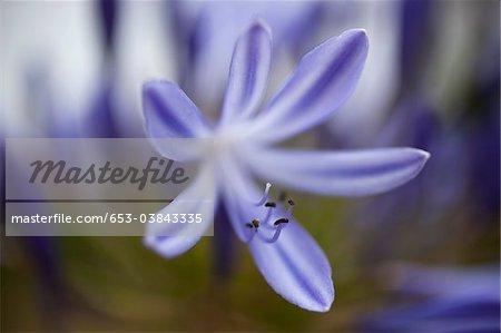 Une fleur pourpre