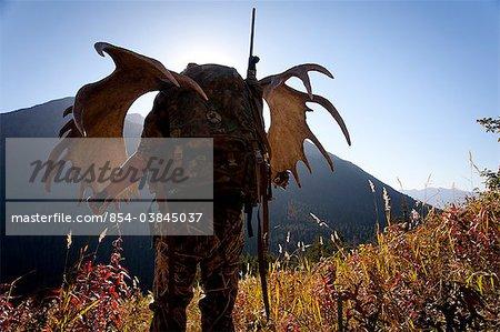 Chasse à l'orignal transporte une grille de bois grand orignal comme il randonnées de sa chasse dans la zone de drainage du ruisseau oiseaux, forêt nationale de Chugach, montagnes Chugach, centre-sud de l'Alaska, automne
