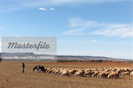 Homme de troupeaux de moutons, Province de Teruel, Aragon, Espagne