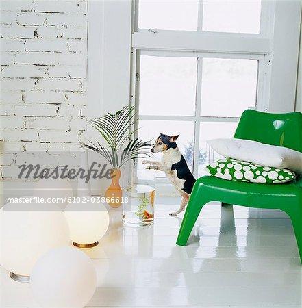 Un fauteuil vert dans une salle blanche, Suède.