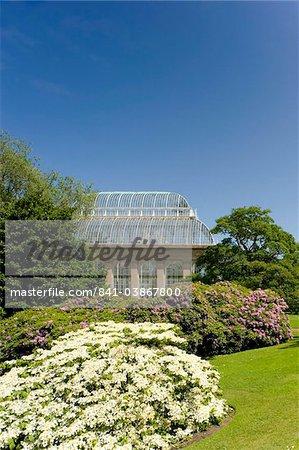 La serre des palmiers entourée de rhododendrons et d'hortensias at The Royal Botanic Garden, Edinburgh, Ecosse, Royaume-Uni, Europe