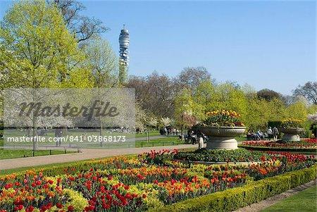 Feder Anzeige von Tulpen, Regent's Park, London, England, Vereinigtes Königreich, Europa