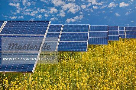Solar panels in rapeseed field