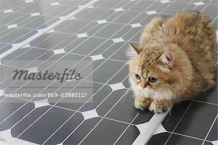 Chat domestique se trouvant sur le panneau solaire