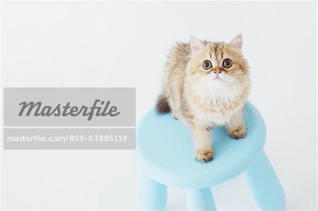 Katze stehend auf Hocker