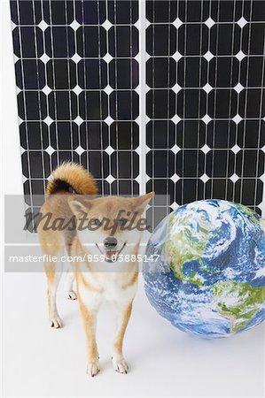 Shiba Inu Stand vor Solarpanel mit Globus