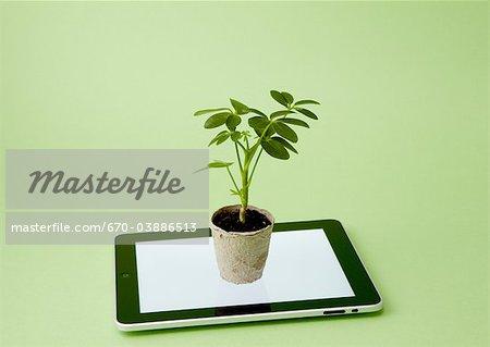 Tablet PC et plante en pot