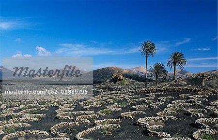 Paysage à proximité Uga, Lanzarote, îles Canaries, Espagne