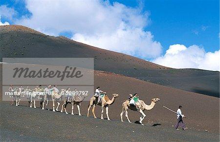 Tour de chameau dans le Parc National de Timanfaya, Lanzarote, îles Canaries,