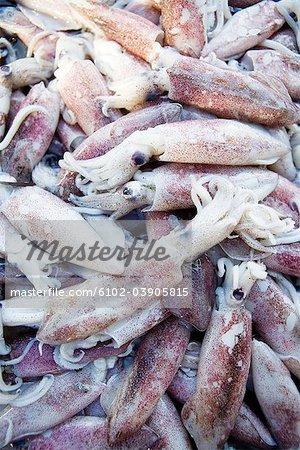 Poulpe au marché aux poissons