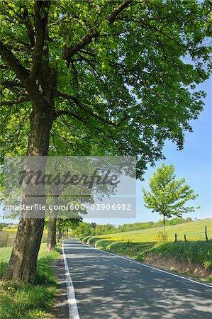 Arbre doublée Road, Wissinghausen, Medebach, Haut-Sauerland, Rhénanie du Nord-Westphalie, Allemagne