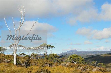 Vue de Cradle Mountain, Cradle Mountain-Lake St Clair National Park, Tasmania, Australie