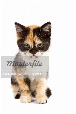 A sadnes kitten sits on a white background