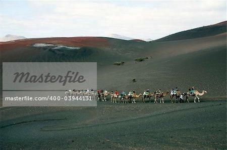 Camel ride at Timanfaya National Park, Lanzarote, Canary Islands, Spain
