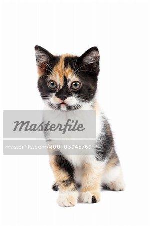 A sadness kitten sits on a white background