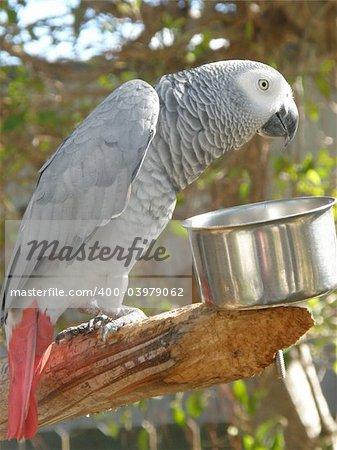 Colorful Tropical Parrot