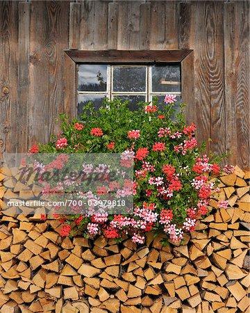 Bois de chauffage et de géraniums sous fenêtre