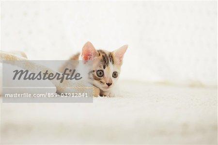 Reposant sur la couverture de bébé chaton