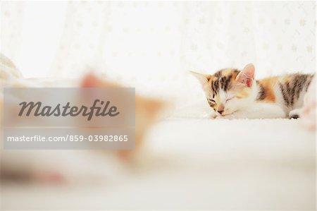 Deux chatons de bébé au repos sur le tapis de sol