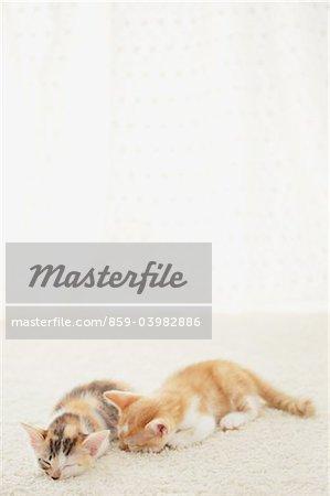 Bébé chatons dormant sur le tapis de sol