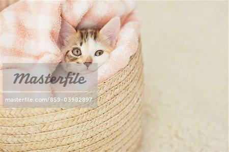 Chaton de bébé relaxant dans panier