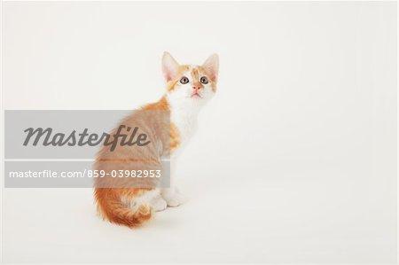 Tabby Kitten Baby sitzen und Nachschlagen