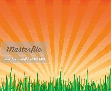 sunrays and grass landscape vector illustration file
