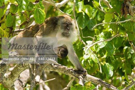 monkey family at the jungles, Phuket, Thailand