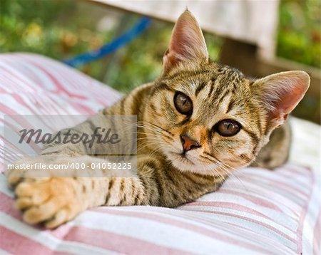 kitten lying down on a cushion in the garden