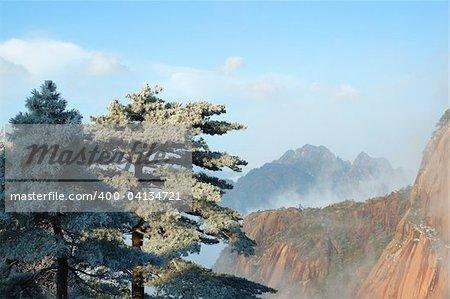 Pins avec une mer de nuages comme toile de fond au Site du patrimoine mondial - montagne jaune (Huangshan), Chine