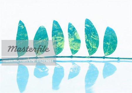 Leaves in row