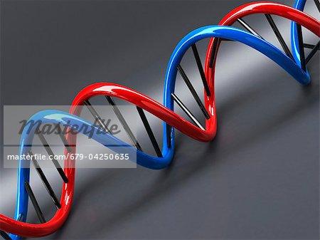 Molécule d'ADN, oeuvre
