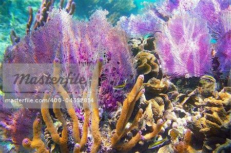 Caribbena coral reef Mayan riviera colorful species underwater treasure