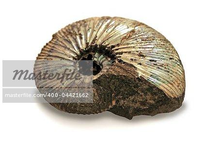 fossilized ammonite isolated on white