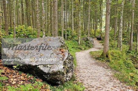 Chemin d'accès dans Zauberwald, Parc National de Berchtesgaden, en Bavière, Allemagne
