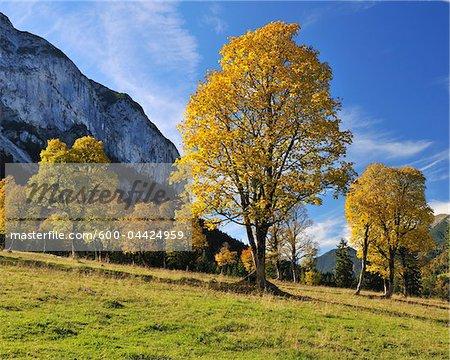 Érables en automne, Grosser Ahornboden Karwendel, Eng, Tyrol, Autriche